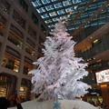 Photos: 白いツリー(1)