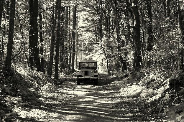 秋の林道 小海