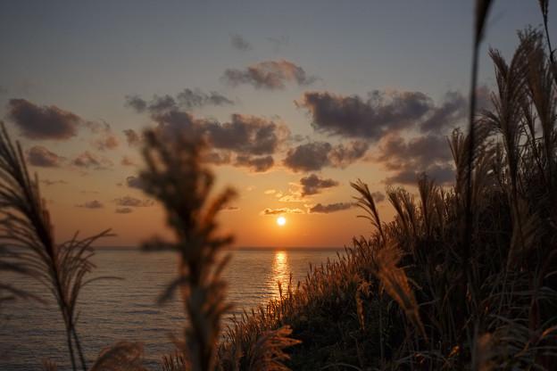 神威岬のススキと夕日