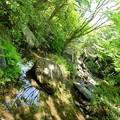 Photos: 緑の迷路。