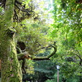 Photos: 森の目印