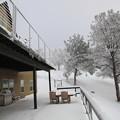 Photos: Snow 1-31-2016 (11)
