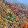 秋の稔る斜面