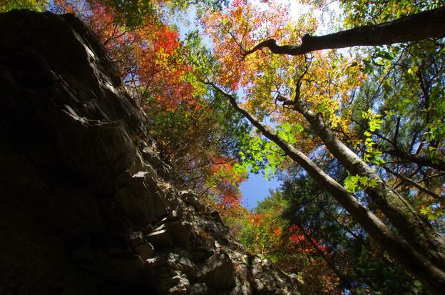 Photos: 岩に彩り