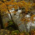 秋の喜遊曲