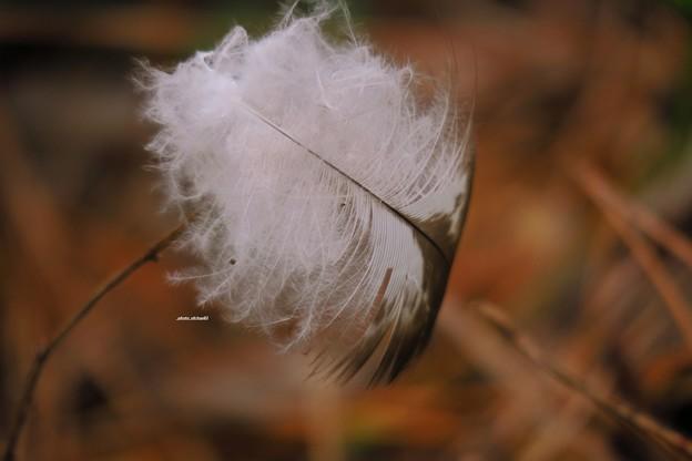 枯れ草を飾った脱羽毛