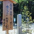 Photos: 大鳥居の跡に・・・