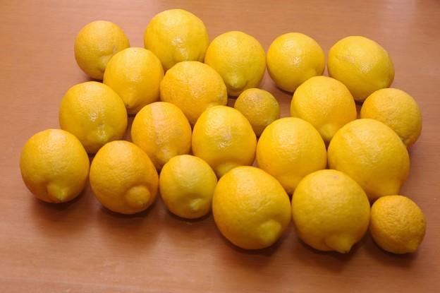IMGP0199柳井市、自宅庭先のレモン21個
