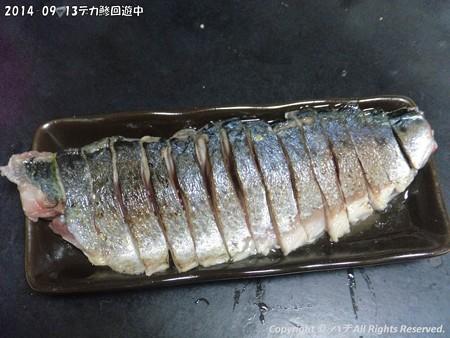2014-09-13デカ鯵回遊中 (8)