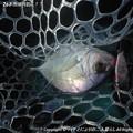 Photos: 2014-10-26お魚は何処に!? (5)