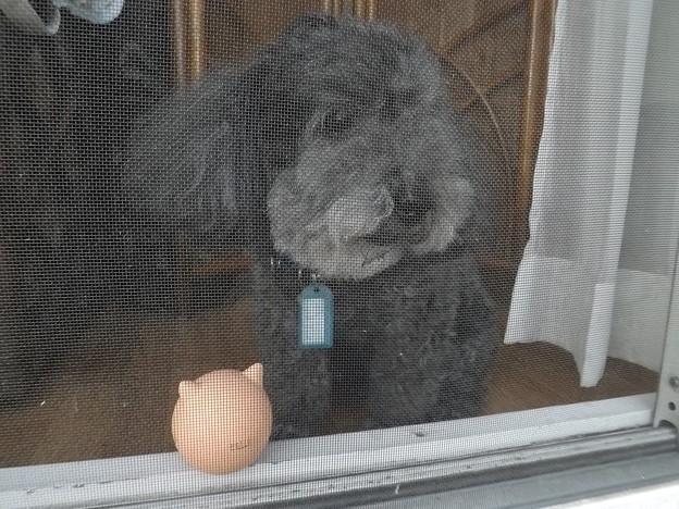 庭を眺めるロッキー