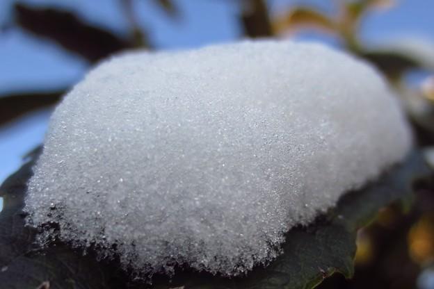 枇杷の葉の雪