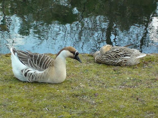 池の畔の風景