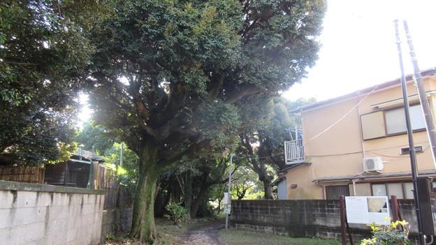 小田原古城 早川口(神奈川県)