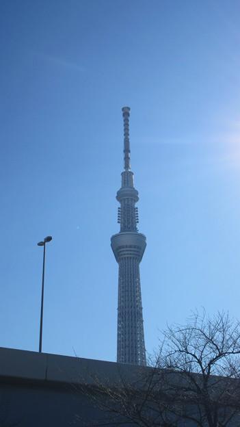 隅田川 桜橋(台東区・墨田区)