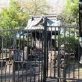 Photos: 三囲稲荷神社(向島2丁目)顕名霊社