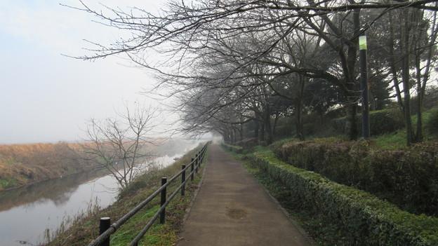 逆井城 西仁連川(茨城県坂東市営 逆井城跡公園)