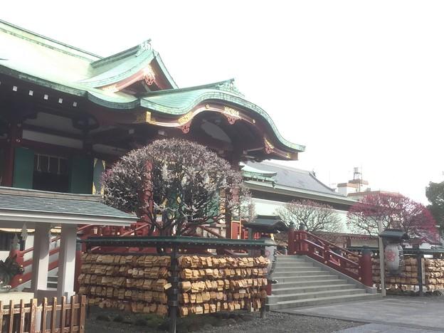 16.02.25.亀戸天神社(江東区)