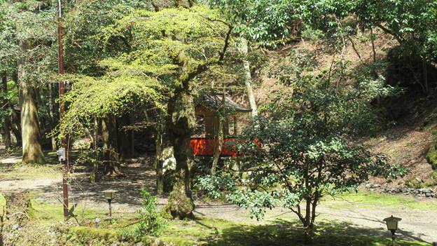 Photos: 貴布禰総本宮 貴船神社(左京区)白岩社