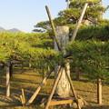 唐崎神社(大津市)芭蕉句碑