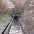 写真: 16.04.12.琵琶湖疏水(大津市)