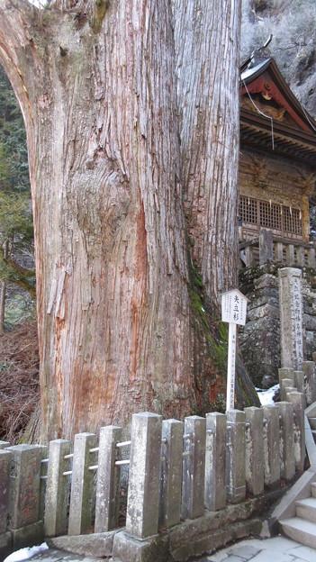 榛名神社(高崎市)矢立杉