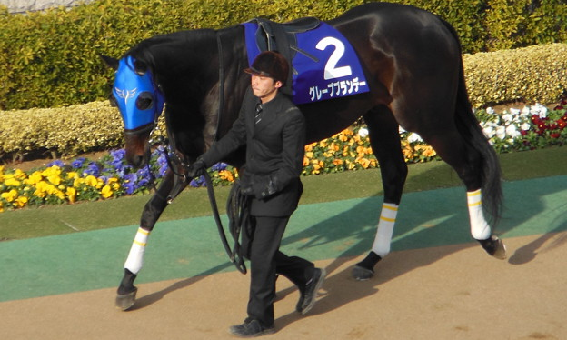 グレープブランデー(1回東京8日 11R 第30回 フェブラリーステークス(GI)出走馬)