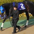 Photos: グレープブランデー(1回東京8日 11R 第30回 フェブラリーステークス(GI)出走馬)