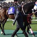 ワンダーアキュート(1回東京8日 11R 第31回 フェブラリーステークス(GI)出走馬)