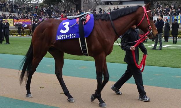 シルクフォーチュン(1回東京8日 11R 第32回 フェブラリーステークス(GI)出走馬)