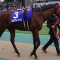 Photos: シルクフォーチュン(1回東京8日 11R 第32回 フェブラリーステークス(GI)出走馬)