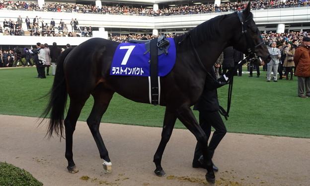 ラストインパクト(4回中山8日 10R 第59回グランプリ 有馬記念(GI)出走馬)