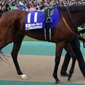 ミッキークイーン(5回東京9日 11R 第35回 ジャパンカップ(GI)出走馬)