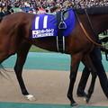 Photos: ミッキークイーン(5回東京9日 11R 第35回 ジャパンカップ(GI)出走馬)