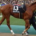 Photos: ネオリアリズム(5回東京9日 10R ウェルカムステークス(サラブレッド系3歳以上準オープン)出走馬)