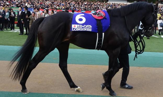 Photos: ラストインパクト(5回東京9日 11R 第35回 ジャパンカップ(GI)出走馬)