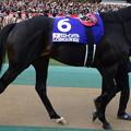 ラストインパクト(5回東京9日 11R 第35回 ジャパンカップ(GI)出走馬)