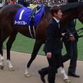 Photos: オーシャンブルー(5回中山8日 10R 第60回グランプリ 有馬記念(GI)出走馬)