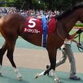 オーシャンブルー(2回東京12日 12R 第129回 農林水産省賞典 目黒記念(GII)出走馬)