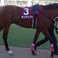 Photos: ディサイファ(1回中山8日 11R 第57回 アメリカジョッキークラブカップ(GII)出走馬)