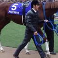 Photos: アドマイヤデウス(5回中山8日 10R 第60回グランプリ 有馬記念(GI)出走馬)
