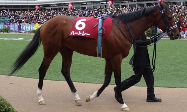 Photos: ハートレー(5回中山8日 9R 第32回 ホープフルステークス(GII)出走馬)