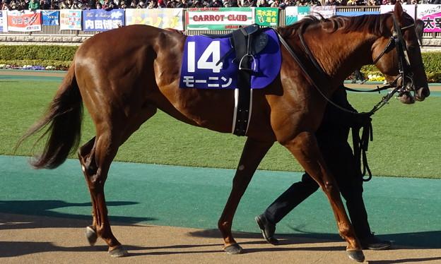 写真: モーニン(1回東京8日 11R 第33回 フェブラリーステークス(GI)出走馬)