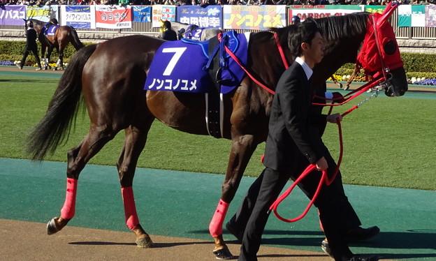 写真: ノンコノユメ(1回東京8日 11R 第33回 フェブラリーステークス(GI)出走馬)
