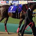 Photos: ノンコノユメ(1回東京8日 11R 第33回 フェブラリーステークス(GI)出走馬)