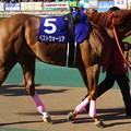 ベストウォーリア(1回東京8日 11R 第33回 フェブラリーステークス(GI)出走馬)