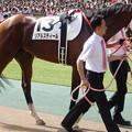 Photos: リアルスティール(2回東京12日 10R 第82回 東京優駿 日本ダービー(GI)出走馬)
