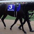 Photos: ラストインパクト(5回中山8日 10R 第60回グランプリ 有馬記念(GI)出走馬)