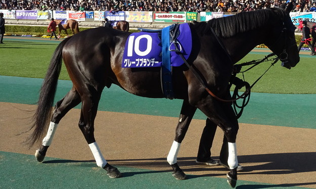 グレープブランデー(1回東京8日 11R 第33回 フェブラリーステークス(GI)出走馬)