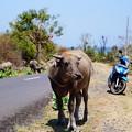写真: Lombok Indonisia